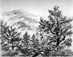 Pine Trees, Cape Cod