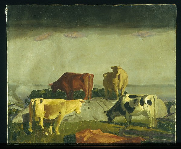 Five Cows