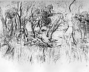 Australian Coastal Bush