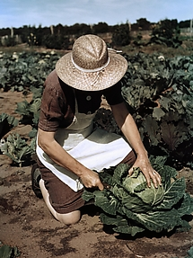 Virginia Norris with Homegrown Cabbage, One of the Many Vegetables Which the Homesteaders Grow in Abundance