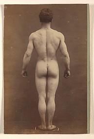 [Male Musculature Study]