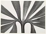 Ranuncul Aceae, Helleborus Foetidus, Blatt