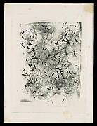 [Dandelion Seeds]