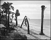 [Palm Trees on Beach, Florida]