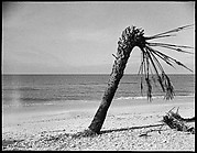 [Palm Tree on Beach, Florida]