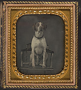 [Dog Posing for Portrait in Photographer's Studio Chair]