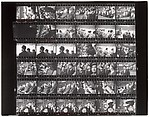 [Contact Sheet from Canadian Assignment]
