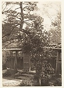 [Flowering Bush in a Garden]