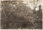 [Cherry Blossoms, Small Bridge over Creek]