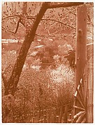 [View from Hillside Through Trees Towards a Valley]