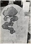 [Gravestone of William Athearn, Close Up]