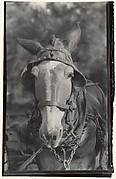 [Mule, Hale County, Alabama]