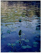 Water Lilies, Rocky Creek, Ozarks, Missouri