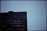 Building and Birds
