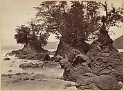 Tropical Scenery, Limon Bay - Low Tide