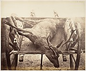 [Stag in Cart]