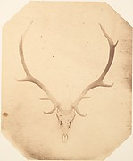 [Stag Trophy Head, Killed by Ned Ross]