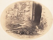 [Dead Female Deer and Game Bird]