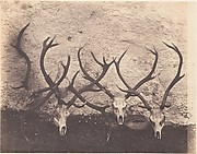 [Stags Heads - Dibedale]