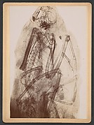 [X-Ray of the Mummy of an Ibis]