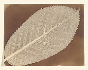 [Leaf]