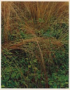 Long-stemmed Grasses, Great Spruce Head Island, Maine
