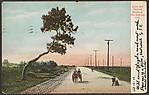 Lynn and Nahant Roadway. The Half-way Tree.