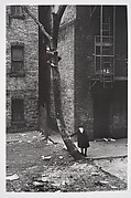 [Two Masked Boys Playing, One Climbing a Tree, New York City]