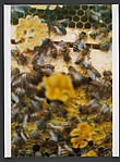 Bio Bees