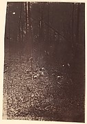 [The Wilderness Battlefield, near Spotsylvania, Virginia]