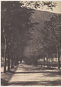 [Allée of Trees, Pau]