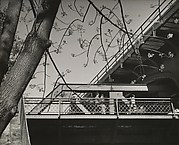 [Tree with Branches, Leaves Foreground; Pedestrians on Elevated Walkway Background]