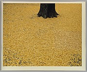 [Tree with Yellow Leaves]