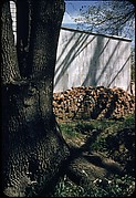 [30 Views of Woodpile and Shed, Possibly Old Lyme, Connecticut]