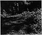 [Two Children in Forest, From Behind]