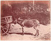 Ane attaché à une charette