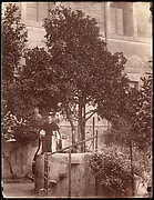 [St. Dominic's Orange Tree on the Aventine]