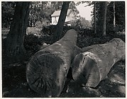 Two Logs and White House near Pescadero, California