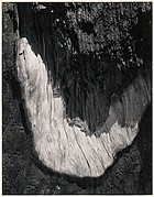 Detail, Sequoia Bark, Yosemite National Park, California
