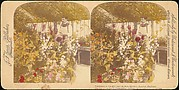 [Pair of Stereograph Views of the Royal Botanic Gardens, Kew Gardens, London, England]