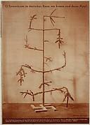 O Tannenbaum im deutscen Raum, wie krumm sind deine äste!