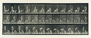 Animal Locomotion.  An Electro-Photographic Investigation of Consecutive Phases of Animal Movements.  Commenced 1872 - Completed 1885.  Volume IV, Women (Nude)