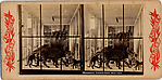 [9 Stereographic Views of the Arsenal Museum, NYC Museum of Natural History, American Museum, Interior Views Showing Stuffed Animals, Central Park, New York]