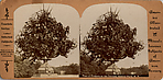 [15 Stereographic Views of Terrace Flower Vases, Central Park, New York]