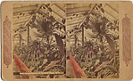 [14 Stereographic Views of Conservatory, Central Park, New York]