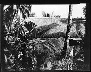[South Seas: Thatched Roof House, Behind Trees and Foliage]