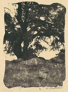 Oak, Mission Ridge, Santa Barbara, California