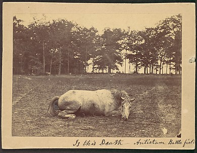 Is This Death - Antietam Battlefield, September 1862