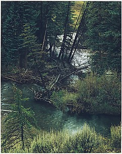 Spruce Trees and River, New Mexico