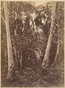 Tropical Scenery, Forest Near Turbo